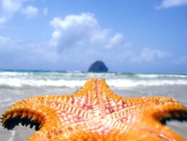 Starfish Welcome by notdisturb