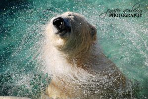 Polar Bear Whirlwind by filemanager