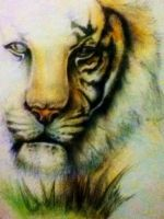 Tiger - Coloured pencil study by MissTangshan95