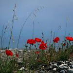 a touch of red by VaggelisFragiadakis