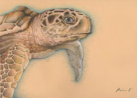 Pauline's Turtle by volcanogodless