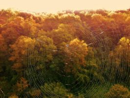 spider web and landscape by deveciufuk
