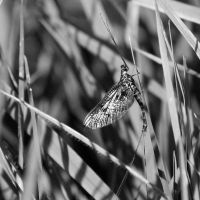 Day 251 - Camoflague by TakeMeToAnotherPlace