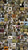 Buds Collage Poster by freespirit000