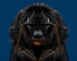 Bee by mant01