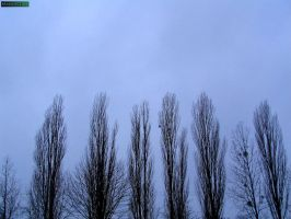 Trees on sky by MannyDiax