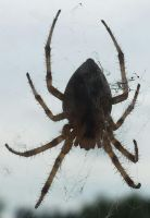 spider close up by RicoGrande