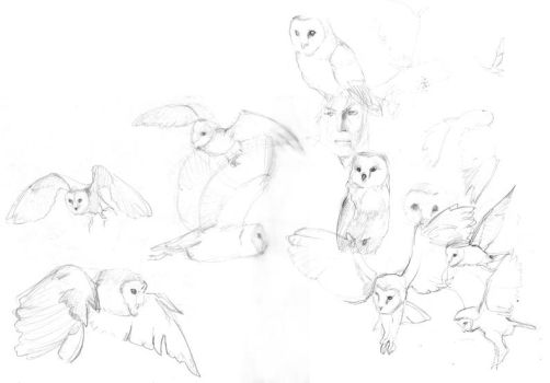 barn owl study by Pika-la-Cynique