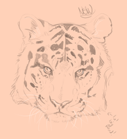 Tiger head sketch by nightspiritwing