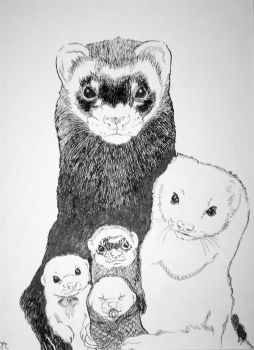 A Business Of Ferrets by Taerietari
