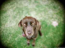 Coco - 30mm f1.4 by geeewocka