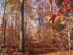 This feeling in fall by AnaturalBeauty