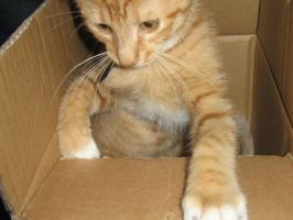 Cat in the Box by Rayning