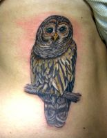 what a hoot by justinstattoos