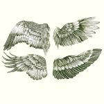 Wings by ClaraBacou