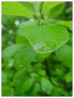 Leaf in the Rain by Archer-1