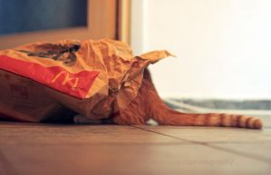 cat in the bag by AndrasZsolt