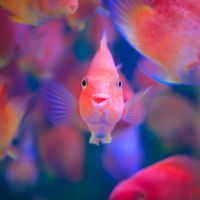 smiling fish by Godling-Studio