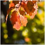 The Leaves Of Fall by kkart