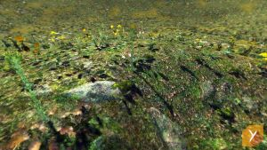 UPDATED - Unity : Vegetation Details by Nobiax