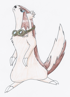 Rugs the Linoone by YagamiDragon