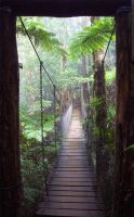 Bridge from Rainforest Fog by arendor