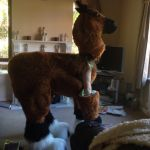A better view of my quadsuit :) by BethieDaBoo