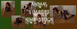 Animal 7 by kime-stock