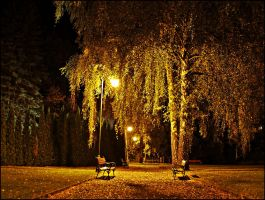 Evening in the park by Csipesz