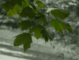 Selective Leaves by NRoberts93