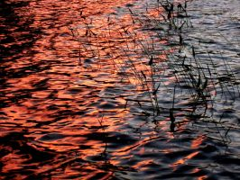 Evening Reeds by wagn18