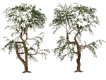 Trees 04 PNG Stock by Jumpfer-Stock