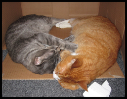 Best Of: Cat Family - Box Kitties w Styrofoam Gob by pukwudgie