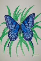 Blue Butterfly by 12jack12