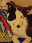 collie dog by shirls-art