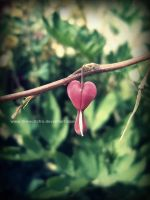 Lonely heart by DarkAfi4