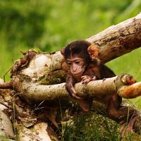 Young Macaque by Yslen