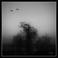 Two Birds in The Dusk by vodj