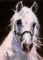 Beauty - Andalusian horse by crystalcookart