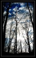 Through the branches II by Kheila