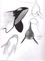 orca studies by Noukah