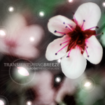 Transient Spring Breeze Cover by dare-star