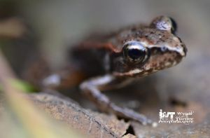 Frog by RoadKillConcepts