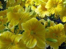 Flowers 4 by penny-duchess-stock