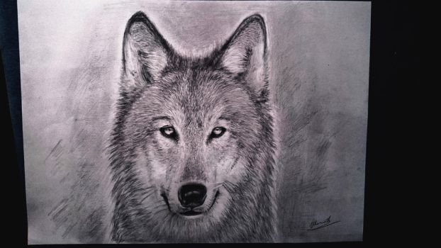 Wolf by AndynoSK