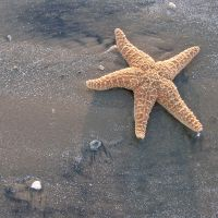 starfish 3 by foureyestock