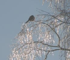The Bird in the GlassTree 1 by Kattvinge