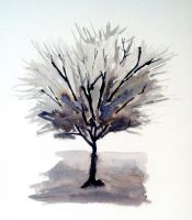 Solo Tree - monochrome by muridaee