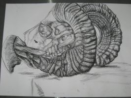 Abstraction Stage 1:Goat Skull by Lupa-Femina