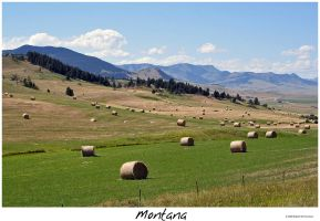 Montana Part XIII by hunter1828